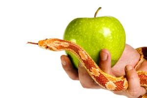 Eve temptation