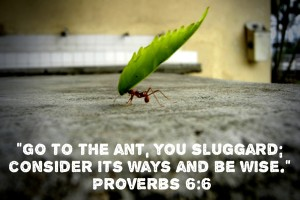 Proverbs_6_6_Go-To-The-Ant